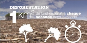 climat,sécheresse,californie,foret,déforestation,macron,nasa