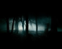 nuit1--forest-night-image-31002.jpg