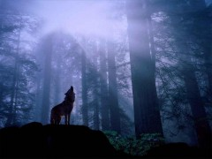 loup-wolf-forest-night-howl.jpg